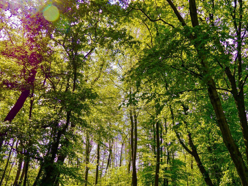 bäume mit sonnenstrahlen