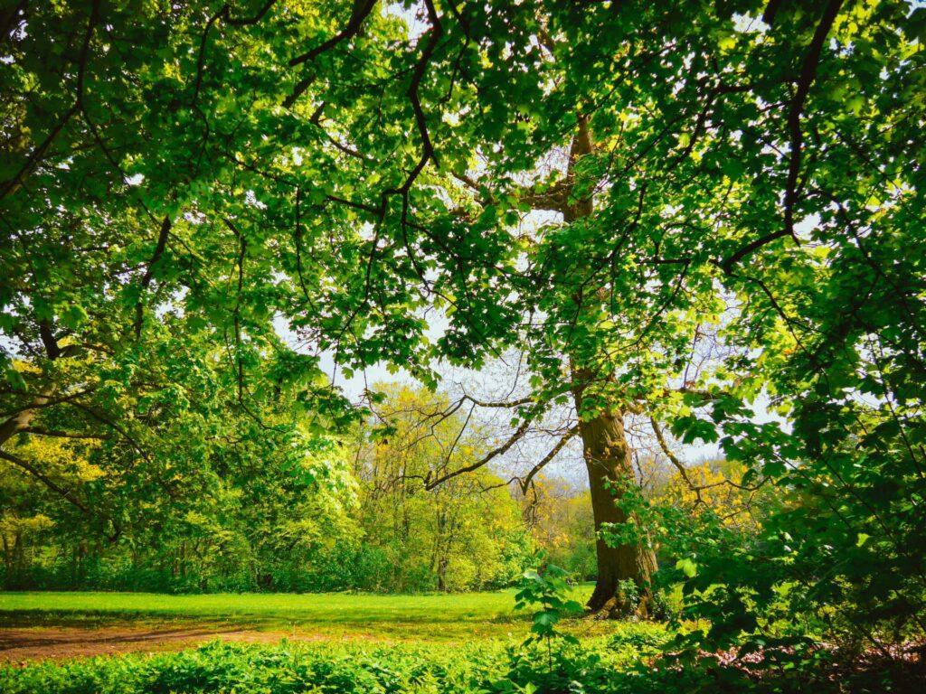 stadtwald wiese mit bäumen