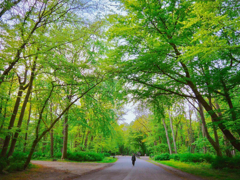 stadtwald weg zwischen bäumen mit mensch
