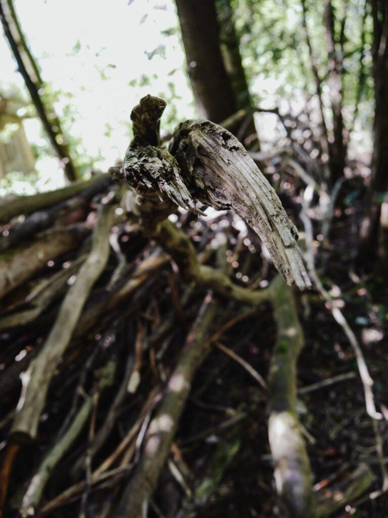 totholzhaufen